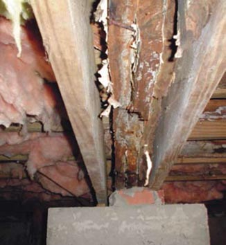 Dirty Crawl Space Building Up in Georgia and South Carolina
